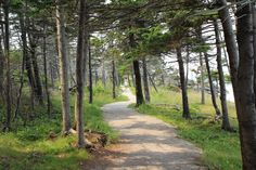A Newfoundland forest trail.
