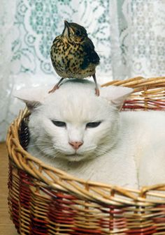 Accessing the creative powers of the unconcious mind is difficult when there's a bird perched on it.