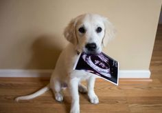 Can't get enough of this adorable pregnancy announcement.
