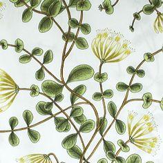 マリメッコ生地(布)KUUSAMA(クーサマ・スイカズラ)商品画像 Honeysuckle Cottage, Marimekko, Lovely Things, Illustration, Plants, Poster, Style, Ideas, Swag