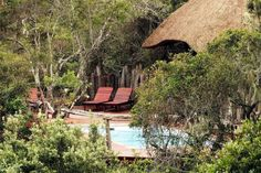 Lalibela Game Reserve and Safari Lodge, Addo Elephant Park, Eastern Cape, South… Elephant Park, Game Reserve, Tree Tops, Lodges, South Africa, Safari, Cape, Places To Visit, House Styles