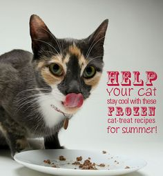 Help your cat stay cool this summer with these #DIY #homemade frozen cat treats!