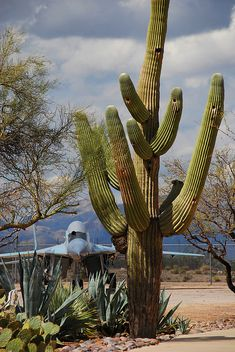 A Mikoyan-Gurevich MiG-29 Fulcrum-A behind a saguaro cactus at the Pima Air and Space Museum, Tucson, Arizona