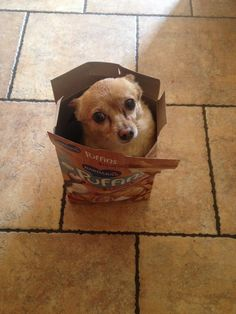 My puppy in a cereal box? Hey that's my dog!:)