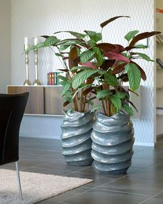 Große Zimmerpflanzen: Gefäße mit Kammmaranthen