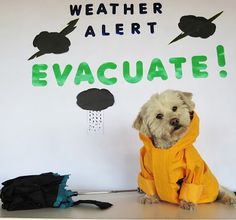 Always Include Pets In Family Disaster Preparedness Plans! #PetPrepared @Hills #ad