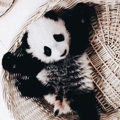 Baby Panda needs a hug. Cute Creatures, Beautiful Creatures, Animals Beautiful, Panda Love, Cute Panda, Cute Little Animals, Cute Funny Animals, Baby Panda Bears, Baby Pandas