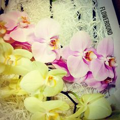#phalaenopsis #cut #flowers