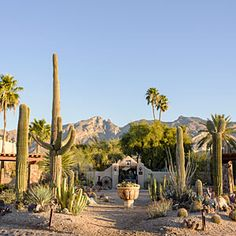 Best Arizona Wineries - Head to the high desert to discover the best new thing in the Grand Canyon State Visit Arizona, Arizona Travel, Sedona Arizona, Best Places To Camp, Places To Travel, Places To Visit, Rv Travel, Desert Life, Desert Trip