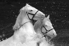 Black and White Photography Galleries | Way Cool Black and White Photographs