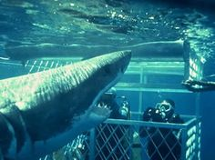Cage Diving with Great Whites in South Africa, this is on my bucket list.