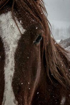 ternpest:  (via500px / Winter Horse by Rachel Levin)