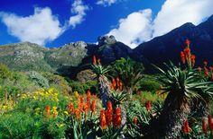 Jardín Botánico Ciudad del Cabo
