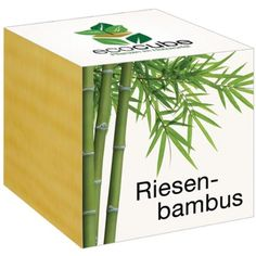 Riesenbambus im Holzwürfel Ecocube http://www.amazon.de/dp/B00K03Z20K/ref=cm_sw_r_pi_dp_s4m.wb1HWS9AE