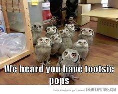 """i just laugh when i see the word """"tootsie""""..."""