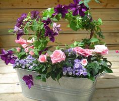 Clematis, Rose, Campanula in a zinc planter,design by Philippe de Stefano