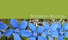 Bloom Festival the Burren Irish Festival, Wild Flowers, Orchids, Places To Go, Clare Ireland, Bloom, Walks, Festivals, Exploring