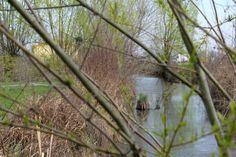 A view of the pond through the branches / Una vista dello stagno fra i rami.
