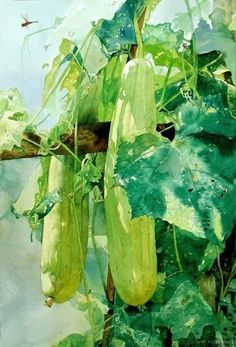 Zhou Tianya, The Watercolour Log: More Paintings