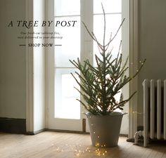 Terrain.  tabletop fraiser fir, and stargazer lights