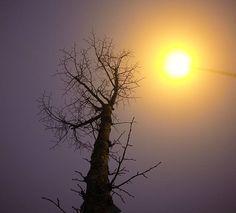 GoPro Day 2: Fog #30daysofgopro #nofilter #gopro #xmas #fog #streetlight #tree #love #art #creepy #light #december #noediting #photography  #photo #passion #december #nature #2015 @gopro