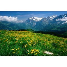 Switzerland Image - Alpine valley, Bern - Lonely Planet ❤ liked on Polyvore featuring backgrounds
