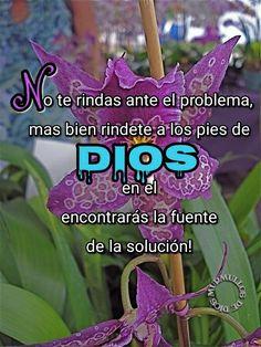 No te rindas ante el problema, más bien rindete a los pies de Dios