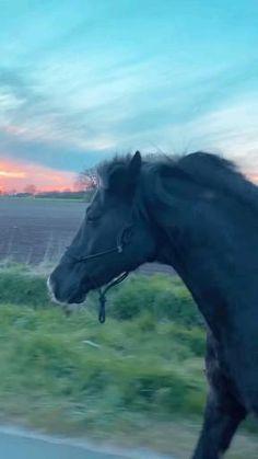Funny Horse Videos, Funny Horses, Cute Horses, Pretty Horses, Horse Love, Beautiful Arabian Horses, Most Beautiful Horses, Animals Beautiful, Funny Horse Pictures