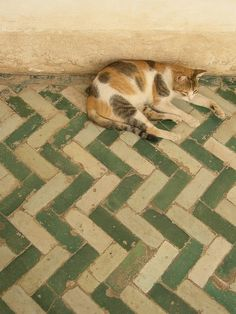 Moroccan cat on Moroccan tile. photography