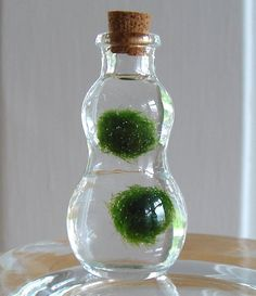 Zen Pet Micro Marimo Moss Balls Gourd Bottle Mini by MyZen on Etsy, $7.50