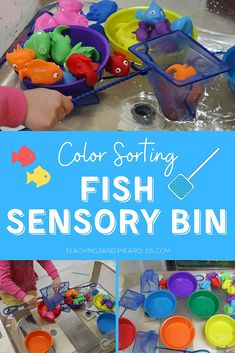 Put together a fish ocean sensory bin that builds color recognition skills! After scooping fish from water, sort and place in matching bowls. Hands-on learning! #fish #ocean #beach #colors #sorting #summer #sensory #water #toddlers #preschool #AGE2 #AGE3 #teaching2and3yearolds Preschool Color Activities, Infant Sensory Activities, Fish Activities, Outdoor Activities For Kids, Preschool Learning Activities, Sensory Bins, Sensory Play, Sensory Table, Preschool Classroom