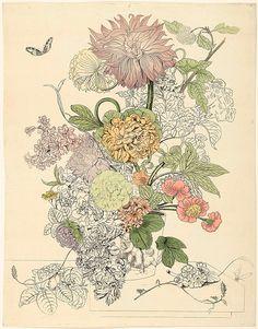 Rijkstudio – Botanical drawings-neonjunkie.org