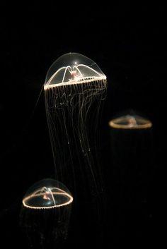Flickr jellyfish :-)