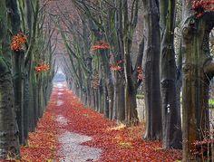 Winter's red carpet