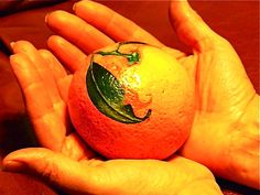 It looks so real - painted rock - orange
