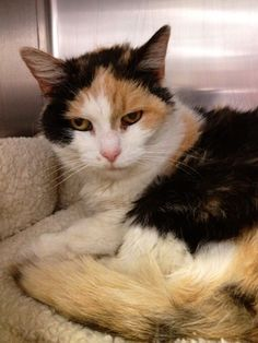 Rainbow is a sweet girl who was dumped outside the shelter during the night in horrible condition. Rainbow was infested with fleas and ticks and was very matted. Now Rainbow is cleaned up and doing much better. Rainbow is a pretty girl who loves to...