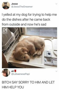 20 Adorable and Hilarious Animal Moments On Weekend - haarschnitte - 20 Adorabl. - 20 Adorable and Hilarious Animal Moments On Weekend – haarschnitte – 20 Adorable and Hilarious - Animal Jokes, Funny Animal Memes, Dog Memes, Funny Animal Pictures, Funny Dogs, Funny Memes, Lmfao Funny, Funny Stuff, Hilarious Sayings