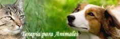 Terapia Holistica de Rehabilitación para mascotas con reestructuración espiritual thecatboutique.cl