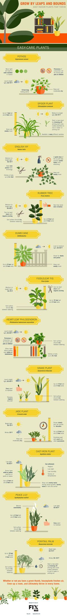 Infographic of easy to grow houseplants and simple tips for caring for them: fiddle leaf fig, spider plant, pothos, philodendron, english ivy, snake plant, jade