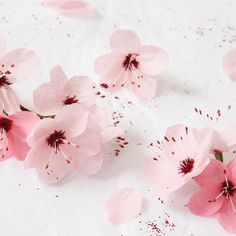 Paper Cherry Blossoms by A Petal Unfolds New Year