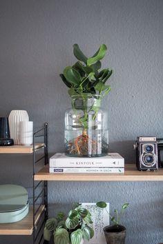 Water Plants, die pflegeleichte Zimmerpflanze. Alles über den neuen Trend, wie du eine Pflanze im Glas pflegst und wo du Water Plants online kaufen kannst! Pfelgeleichte Zimmerpflanzen | Pflanzen Deko | Pflanzen Wohnzimmer | Urban Jungle Blogger | String Regal | paulsvera #greenroom
