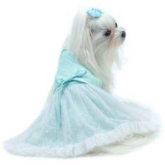 Tiffany Lace Dress by Oscar Newman: beautiful Tiffany blue dog dress from the affordable Truly Oscar line