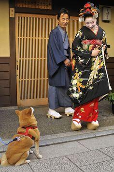 Debut of maiko Mamefuji by Mamefuji was led around by her kimono dresser - he announced her official debut as a maiko. At the Nishimura okiya, with Japanese Shiba dog Japanese Dogs, Japanese Art, Samurai, Turning Japanese, Nihon, China, Japanese Beauty, Yukata, Japanese Kimono