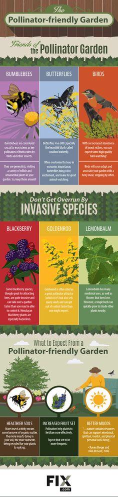Native Plants and the Pollinator Garden | Fix.com