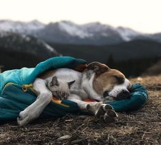 This Cat And Dog Love Travelling Together, And Their Pictures Are Absolutely Epic | Bored Panda