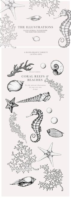 Coral Beach - Maritime Illustrations by Laras Wonderland on @creativemarket
