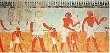 Ancient Egypt - Measuring and recording the harvest is shown in a wall painting in the tomb of Menna, at Thebes, Egypt (18th dynasty).
