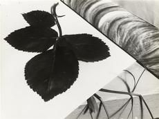 Still Life Composition (Getty Museum) Florence Henri, Laszlo Moholy Nagy, Vision Photography, Moving To Paris, Getty Museum, Multiple Exposure, Gelatin Silver Print, Grand Palais, Cubism