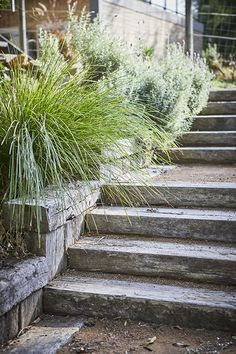 Best Picture For Australian garden landscaping grass For Your Taste You are looking for something, a