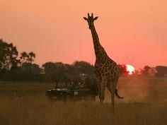 African safari in Botswana